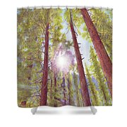 Catching The Sun Shower Curtain