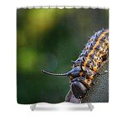 Macro -caterpillar Shower Curtain