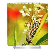 Caterpillar Stage 2 Shower Curtain