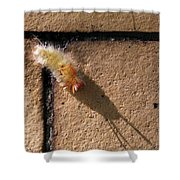 Caterpillar With Shadow Shower Curtain