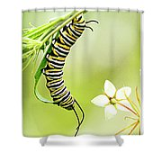 Caterpiller On Plant Shower Curtain