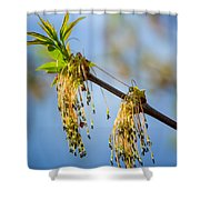 Catkin Time 2 Shower Curtain