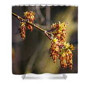 Catkin Time 4 Shower Curtain