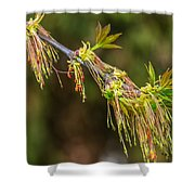 Catkin Time 5 Shower Curtain