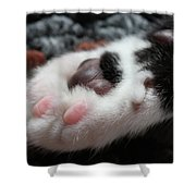 Cats Paw Shower Curtain