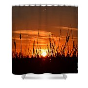 Cattails And Twilight Shower Curtain
