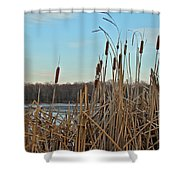 Cattails At Skymount Pond Pa Shower Curtain