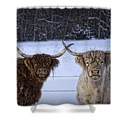 Cattle Cousins Shower Curtain