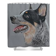 Cattle Dog Shower Curtain