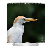 Cattle Egret Close-up Shower Curtain