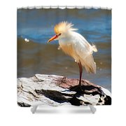 Cattle Egret In Breeding Plumage Shower Curtain