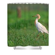 Cattle Egret In Greenery Shower Curtain