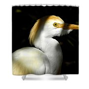 Cattle Egret In Shadow Shower Curtain