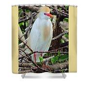Rainbow Bill Cattle Egret Shower Curtain