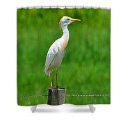 Cattle Egret On Post Shower Curtain