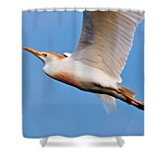 Cattle Egret On The Wing Shower Curtain
