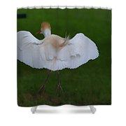 Cattle Egret Prepared For Landing - Digitalart Shower Curtain