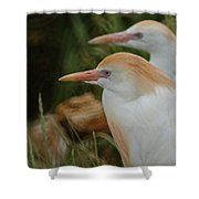 Cattle Egrets Dry Brushed Shower Curtain