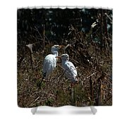 Cattle Egrets In A Pasture Shower Curtain