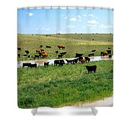 Cattle Graze On Reclaimed Land Shower Curtain
