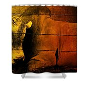 Cattle In Sunny Texas Shower Curtain