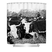 Cattle: Longhorns Shower Curtain