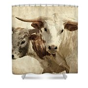Cattle Steers Shower Curtain