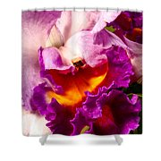 Cattleya IIi Shower Curtain