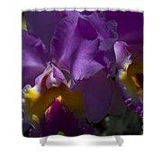 Cattleya Orchid Garden Of Eden Maui Shower Curtain