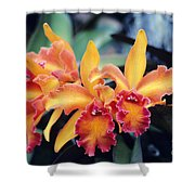 Cattleya Orchids Shower Curtain by Allan Seiden - Printscapes