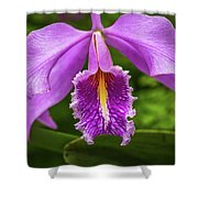 Cattleya Purpurata Shower Curtain