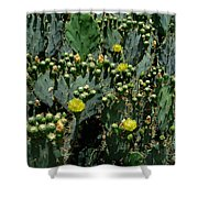 Catus Blossoms Shower Curtain