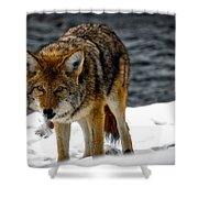 Caught In The Act Shower Curtain