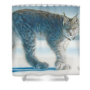 Caught In The Open II Shower Curtain