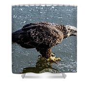 Cautious Eagle Shower Curtain