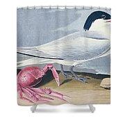 Cayenne Tern Shower Curtain by John James Audubon