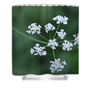 Cedar Park Texas Hedge Parsley Shower Curtain