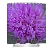 Cedar Park Texas Purple Thistle Shower Curtain