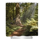 Cedar Path Shower Curtain
