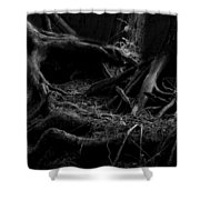Cedar Roots Black And White Shower Curtain