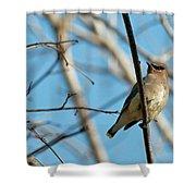 Cedar Wax Wing Shower Curtain