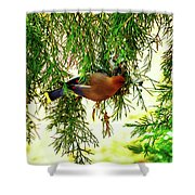 Cedar Waxwing Beauties 19 Shower Curtain