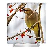 Cedar Waxwing Feeding  Shower Curtain