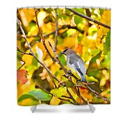 Cedar Waxwing In Autumn Leaves Shower Curtain