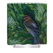 Cedar Waxwing In Lilac Shower Curtain