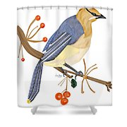 Cedar Waxwing In The Berries Shower Curtain