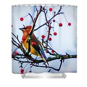 Cedar Waxwing Painting Shower Curtain
