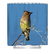 Cedar Waxwing Poses Shower Curtain