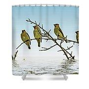 Cedar Waxwings On A Branch Shower Curtain