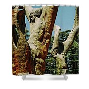 Cedars Of God Jesus Tree  Shower Curtain